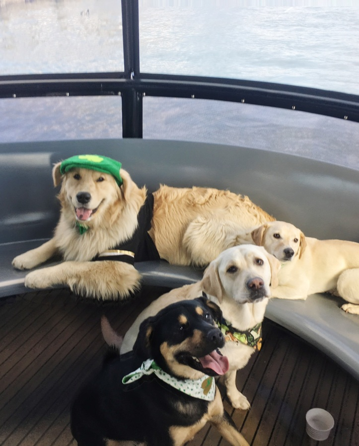 Puppies on a Boat